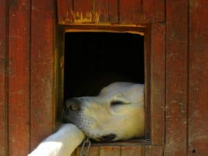 offrir une niche à son chien